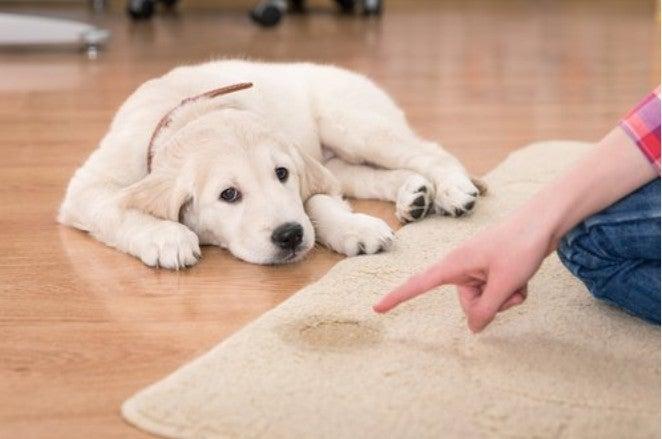 uczenia psa załatwiania