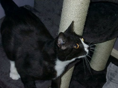 Kot Moon Unit — zaginął w Londynie, a odnalazł się w Paryżu