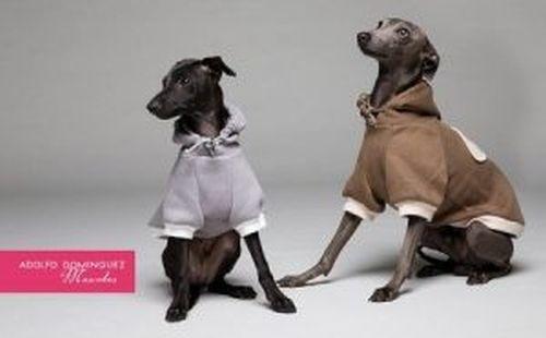 Kolekcja ubrań dla psów od Adolfo Dominguez