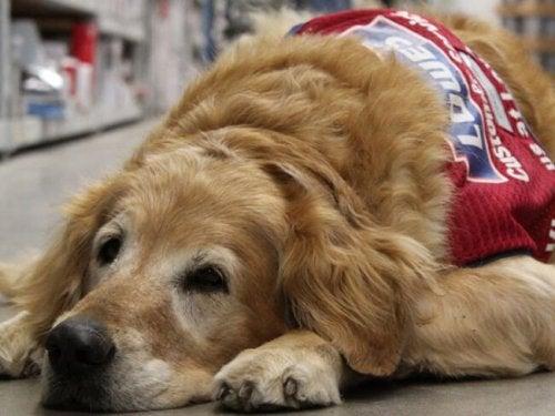Weteran i pies opiekun zatrudnieni w sklepie