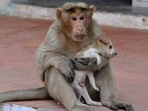Małpa przygarnia bezdomnego pieska żyjącego na ulicy