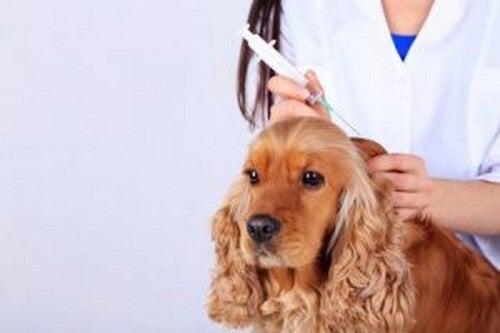 Szczepienia psa