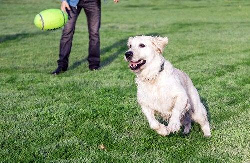 Zwroty do miłośników psów - czego im nie mówić?