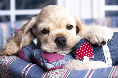 Miód dla psów – korzyści zdrowotne
