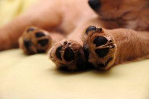 jak zrobić manicure psa w domu