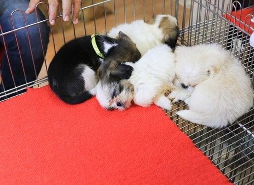 Psy bezdomne – w San Francisco dostają drugą szansę