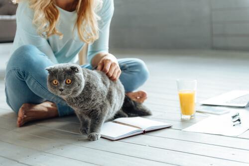 komunikacja kota szary kot z panią