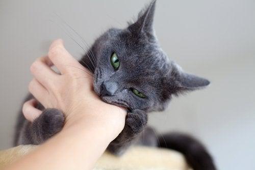 Kot gryzie dłoń właściciela