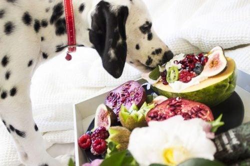 Naturalna żywność dla psa - co uwzględnić w diecie?