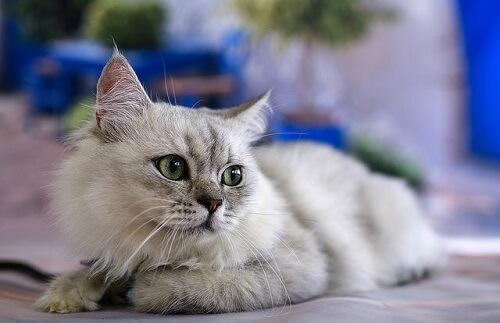 Komunikacja kota - co mówi twoje zwierzę?