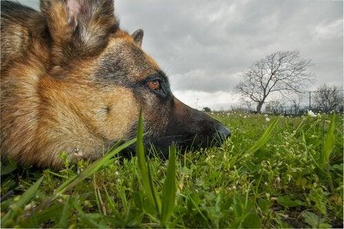 Trujące rośliny - co szkodzi naszym psom