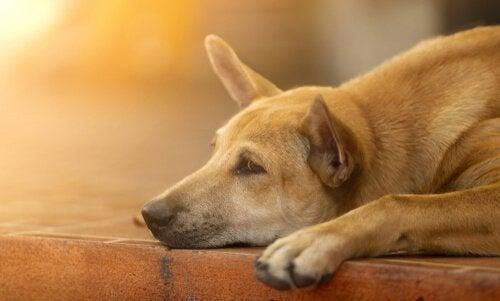 Jak pocieszyć psa - 6 sposobów