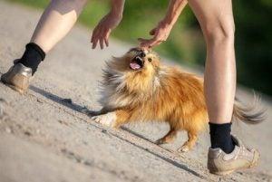 typy osobowości psa