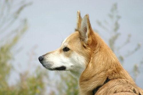 Ugryzienie przez psa - jak tego uniknąć?