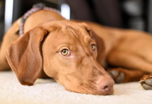 Jak pomóc Twojemu psu przezwyciężyć lęk?