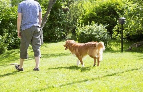 Chodzenie za właścicielem - czemu psy to robią?