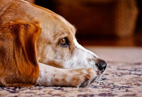 Czy psy mają duszę? Fakty