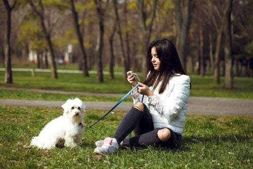 pies w parku na spacerze