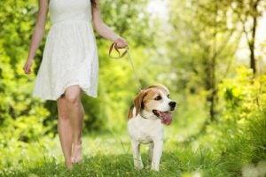 niektóre psy lubią samotność