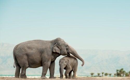 słonica ze słoniątkiem