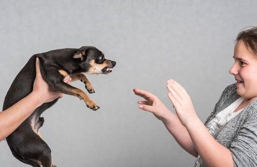 warczący pies