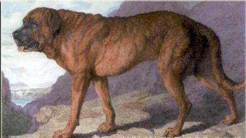 Wymarłe rasy psów