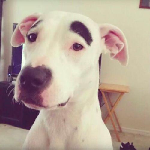 Zdziwiony pies