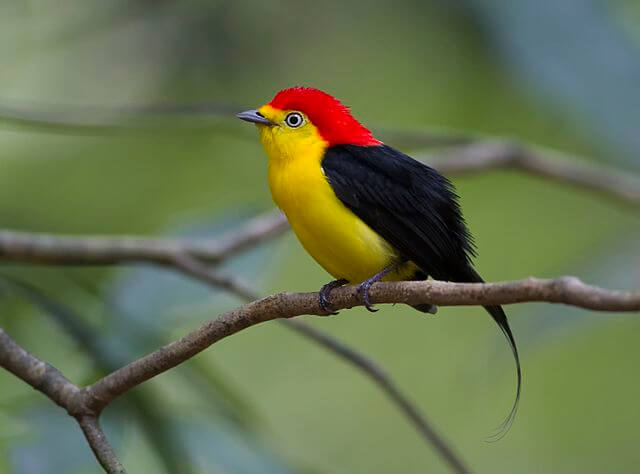 Imponujące ptaki - gorzyk drutosterny