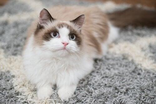 Jak wytresować kota w domu? wskazówki!