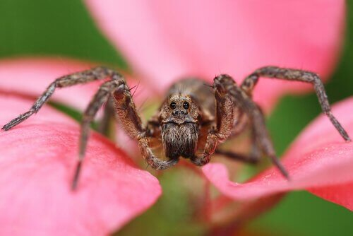 najniebezpieczniejsze pająki