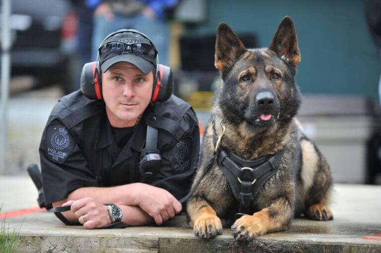 pies i policjant