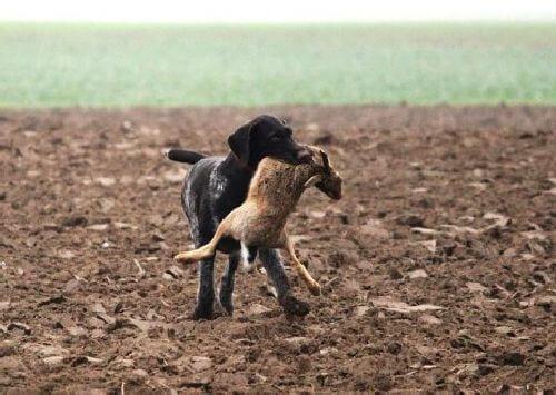 Pies z ofiarą