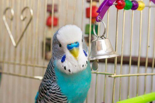 Niebieska papużka w klatce z dzwoneczkiem