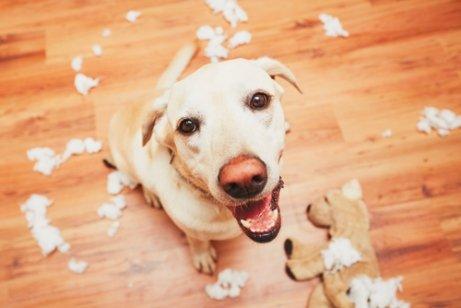 pies pamięć pogryziona zabawka