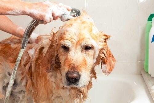 Kąpanie psa zimą – czy to dobry pomysł?