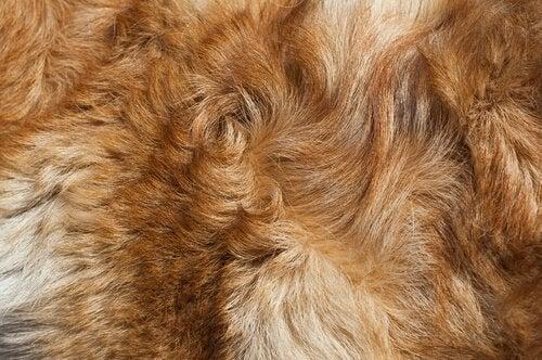 Futro - zapach mokrego psa