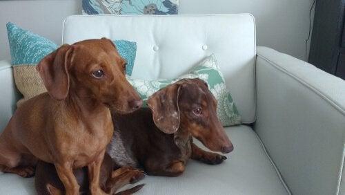 Znudzone psy siedzące same w domu.