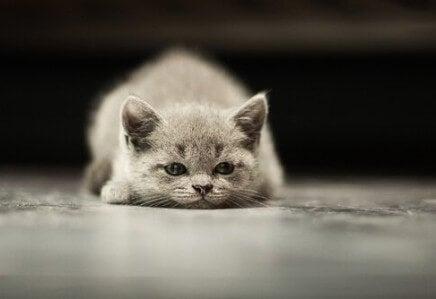 Nowotwory u kotów – najczęstsze formy