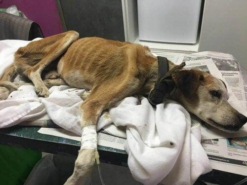 Vali - historia psa, który odbył długą podróż