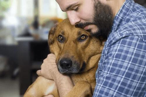 nowotwory u psów