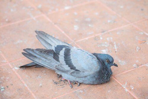 Chory ptak