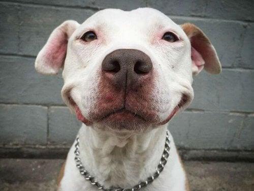 Brinks się uśmiecha, odkąd został adoptowany