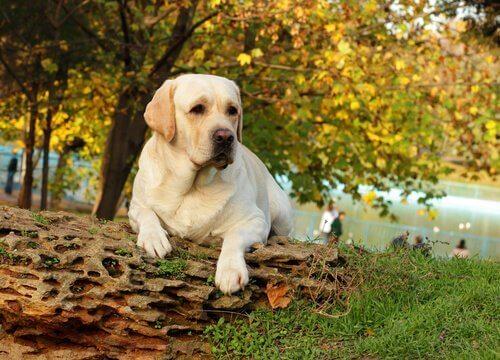 Pies w parku.