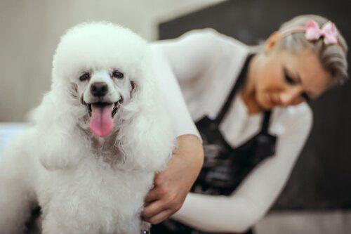 Pies u fryzjera