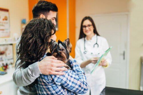 Wizyta w klinice weterynaryjnej – jak zmniejszyć stres psa