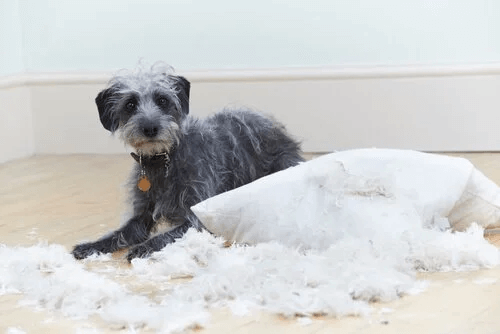 Problemy behawioralne u psów: 6 przykładów