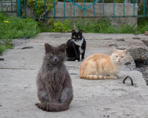 kolonie kotów na ulicach