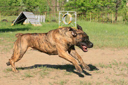 FCI – Rasy psów, które nie są nieuznawane