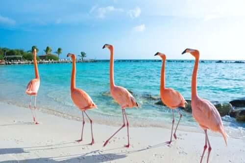 Środowisko flamingów