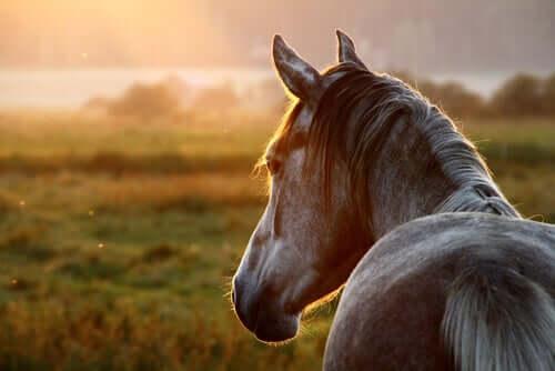 Grypa u koni - przyczyny i objawy